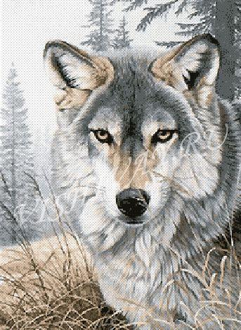 Разве этот волк вам не