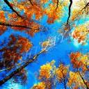 Глядя в небо