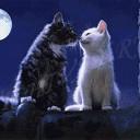 Кошачья луна_2
