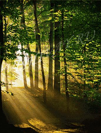 Лесные лучи