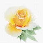 Желтая южная красавица акварель