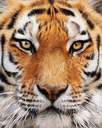 Хищники_Тигр