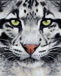 Хищники_Дымчатый леопард