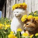 Солнечное счастье
