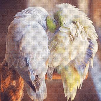 О любви не говори